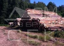 Заготовка костромского леса - штабеля леса 1