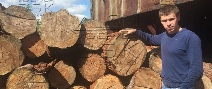 Зимний лес на остатке – ответ на запрос заказчика