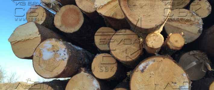 Запасаемся зимним лесом под строительство домов из бруса