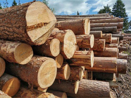 Зимний лес под строительство деревянных домов 2018г.