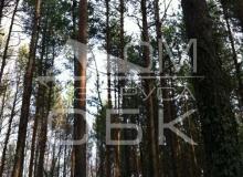 Костромской зимний лес