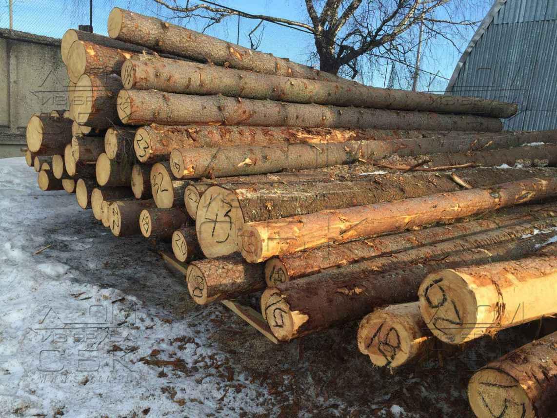 Свежий Костромской зимний лес на производстве для срубы домов из бревна - 2